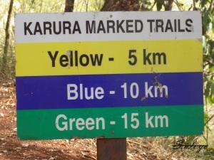 Karura Forest 021